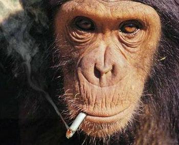 smoking_monkeys_24.jpeg